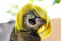 Hair; Wigs