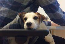 Ein Leben ohne Hund ist möglich, aber sinnlos / Hunde jeder Art, Mops, Beagle, Labrador, Dackel, Mischling, Schäferhund ...