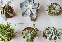 flora-side