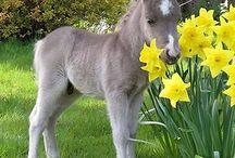 Horsecheck fun / Leuke grappige paardenfoto's