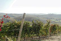 Langhe / vineyards and more