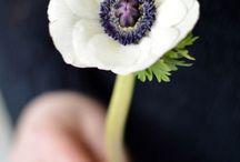 My photos - Flowers