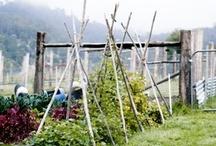 Homestead :: Garden / by Kelly Ann Jones