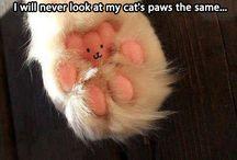 cute animal stuff