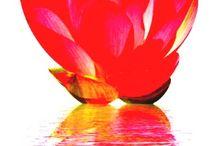 Chakra & Meditation