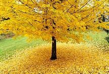 My favorite time of year / by Alexis Brazell