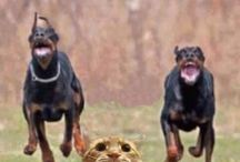 Perros graciosos