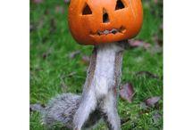 Halloween in the Wild
