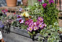 Balcony Gardening Idea / Pot arrangements from my balcony garden