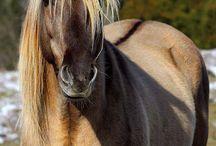 Favorite horse colors