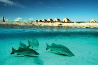 Our Favorite Dive Sites