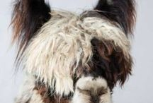 All About Alpacas / The best time to raise alpacas? Right now!