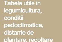 legumicultura