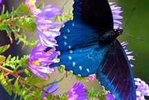 butterflies n moths