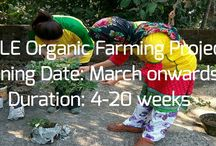 Urban organic farming project