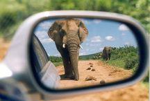 Elephants <3 / by Shannon Rolufs