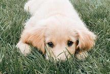Cutie cub / Søte dyr
