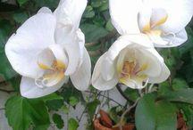 Com elas... minhas orquídeas.