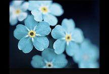Blue forest weeding / Kwiaty tort dodatki