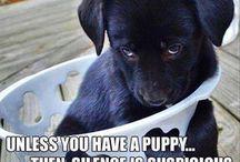 Älskahundar