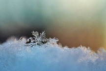 Snow and Flakes / by Diane Duitsman