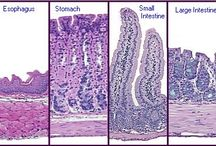 Histology / Pretend I'm Endoplasmic Reticulum. Do you want me smooth or rough?