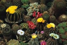 Garden - Plants, Seeds & Bulbs