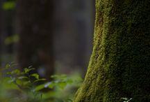 Лес. Ведьмы