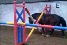 Horse Fails