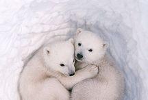 animales:-P  B-)g encantadores