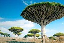Drzewa / Tree