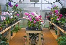 Greenhouse/Orchids