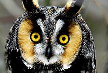 Birds/Owls / by Debbie Beals