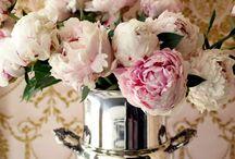 Home - Flowers / Flowers