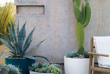 Cactus // Cactus