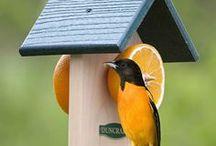 madárlak
