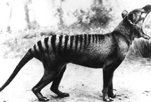 Fauna - недавно исчезнувшие Животные