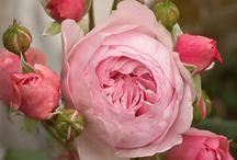 Kvety ♡