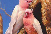 Uccelli e simili