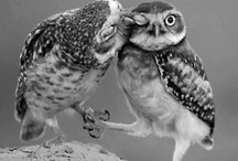 Animals <',)))><