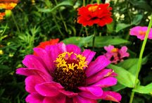 Çiçek,böcek :)
