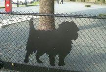 Dog Park Ideas / by Laura