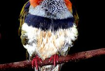Birds / Interesting birds. Detailed. Quirky