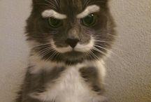 Grumpy cat. visage de chat