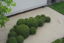 boxwood and topiary