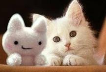 Kitties / by Bonae L'amour