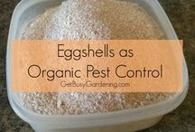 Garden Pest Control / Organic garden pest control is safe and easy when you use these natural, biological and non-toxic solutions.