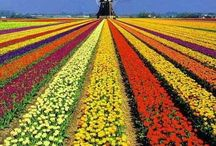 Keukenhof, Amsterdam's garden. / Open from 24 March 2016 - 16 May 2016. Unbelievably beautiful and absolutely breathtaking. Surprising and inspiring, new ideas, trends and features to apply in your own garden. Holland Flower Tours.