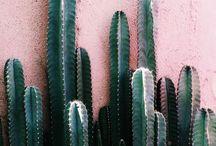 Cactus Nails | Cactus Style!!!!