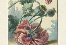 Ботанический рисунок